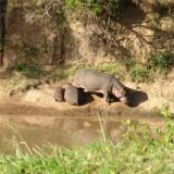 Guest Post: The Highlights of my Botswana Safari…
