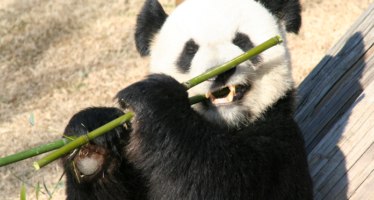 Guest Post: Top Wildlife Voluntary Schemes around the Globe