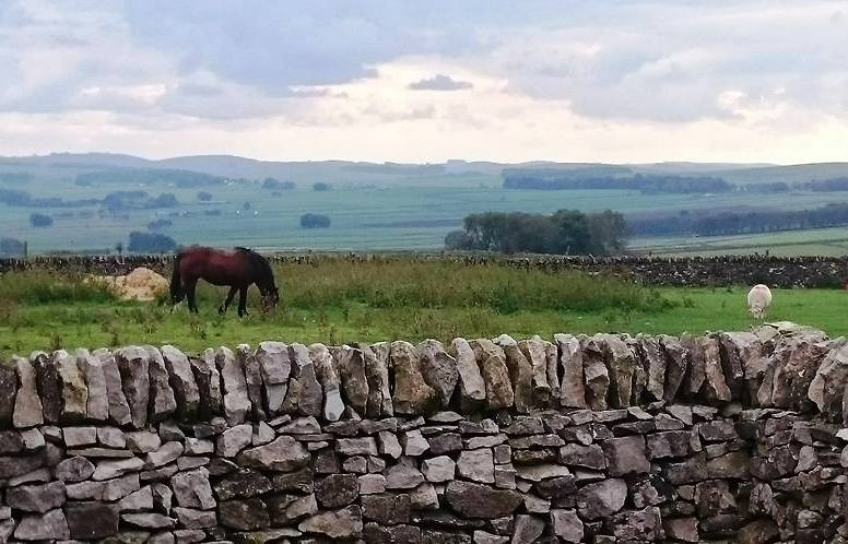 Horse and sheep, Peak District.
