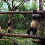 China: DIY tourism and independent travel…