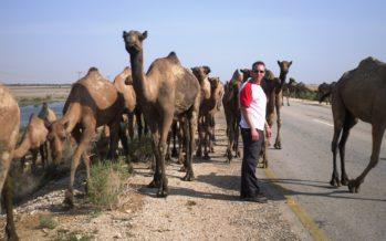 Photo Flashbacks… Um, there are some camels in the road