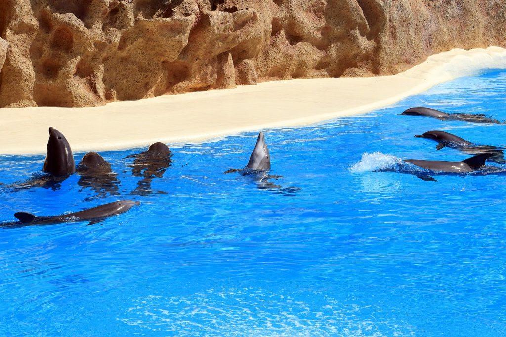 Tenerife Dolphins.