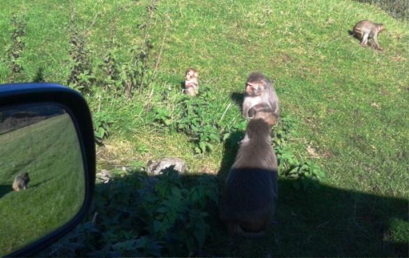 Innocent Monkeys
