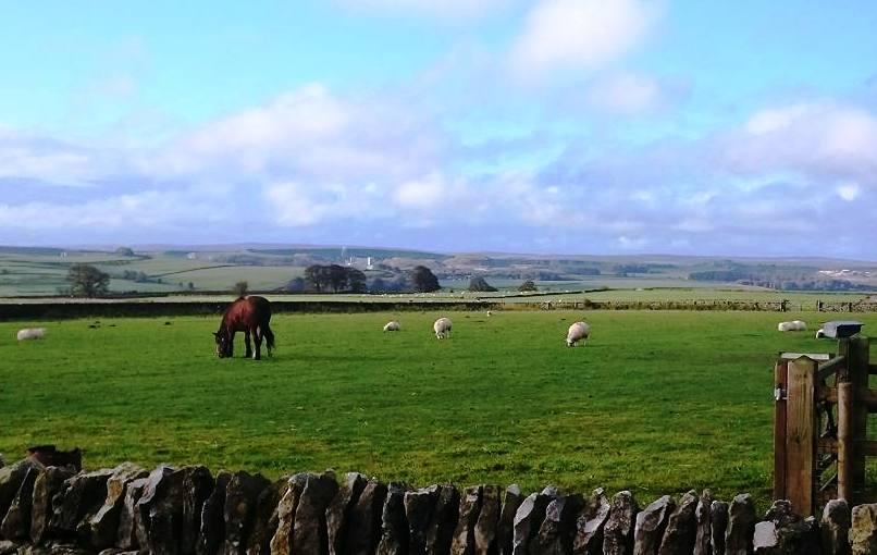 Our farmyard neighbours