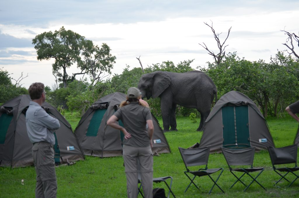 Botswana camping, escape the politics