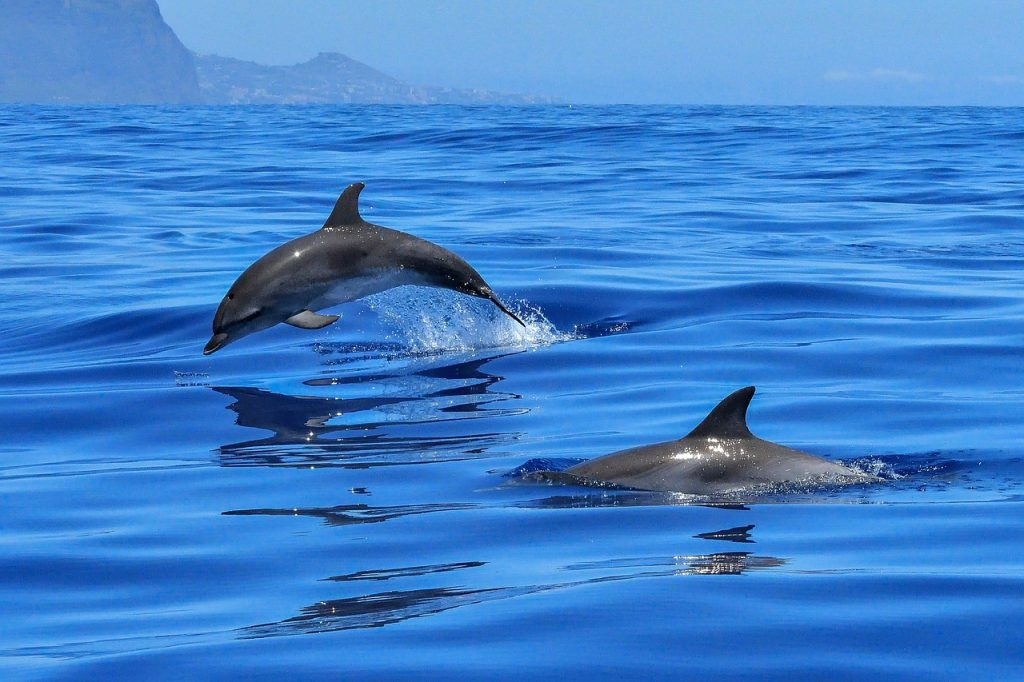 Over-tourism, watch dolphins in the wild