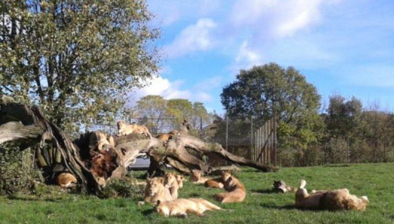 Africa's Big Five… in Wiltshire!!