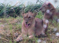 Photo Flashbacks: Magic Animal Moments!